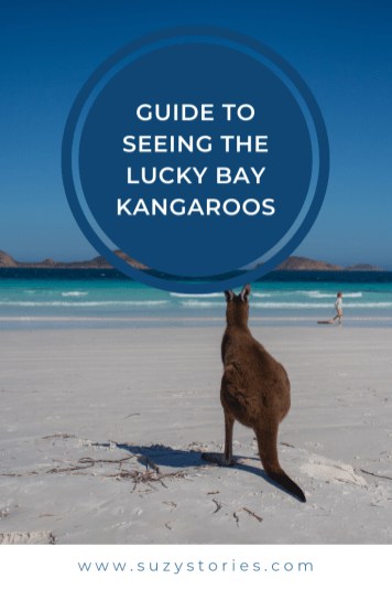 guide to the kangaroos on Lucky Bay