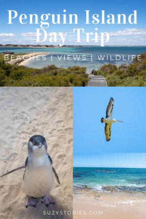 pin collage of penguin island photos