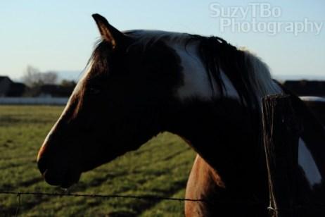 Paint Horse Colorado