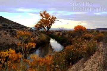 Montrose Colorado Irrigation Canal Fall
