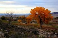 Montrose Colorado Fall Foliage