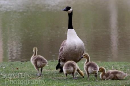 Mama_Goose