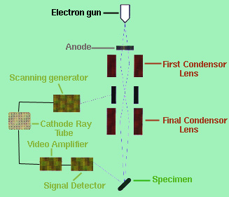 simple microscope diagram comcast cable tv hookup block great installation of wiring electron microscopy rh sv rkriz net compound drawing