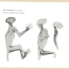 Chimpanzee Skull Diagram 1992 Dodge Dakota Fuse Box Anatomy System Bing Images