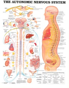 Anatomical chart co skokie il art direction by christine  also anatomy  nervous system sva library picture periodicals collections rh svapicsandmags