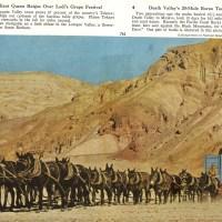 Cowboys & Western Life