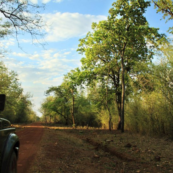 Naturalist-Led Jeep Safaris