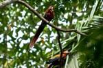 Costa Rica-137