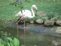 Flamingos look surreal