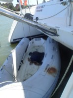Turtle in our dinghy