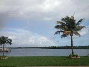 Rainbow and palm tree