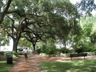 live oaks over square