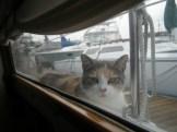 cat on side deck