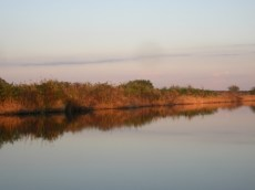 morning light, Moore Haven canal