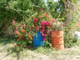 LS_20150414_114545 azaleas and trash cans