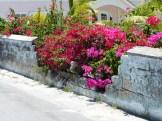 LS_20150414_125056 azaleas on wall