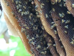 beehive, close-up