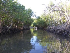 Mangrove Tunnel - heading into Fawn Harbor Village