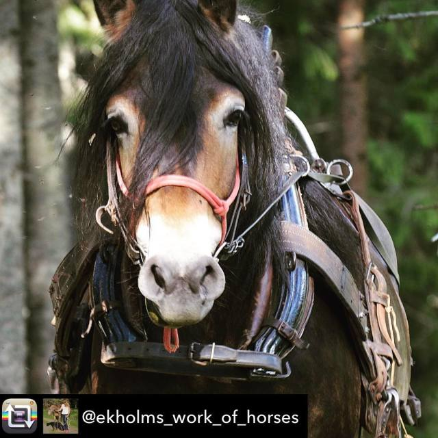 Superfin bild frn Ida Ekholms instagram taggad med svehast! mnadensrasfreninghellip