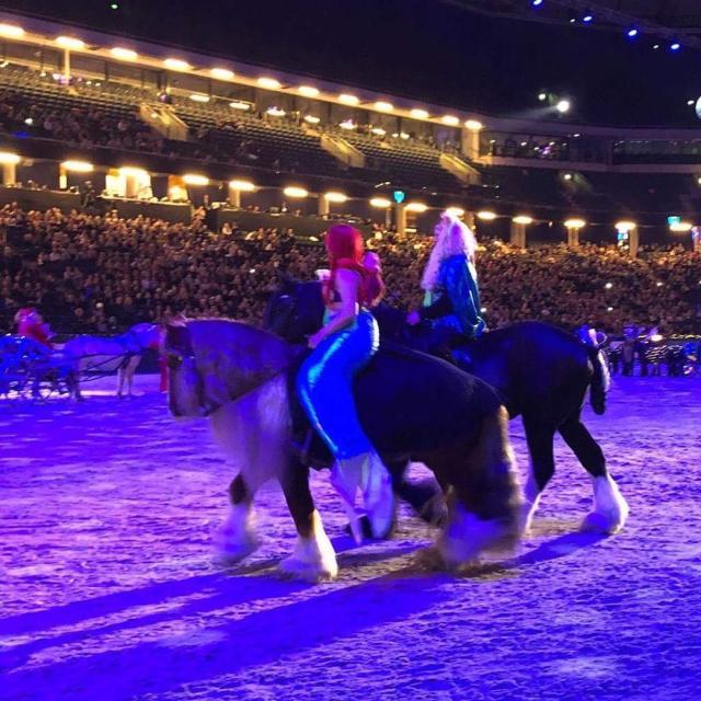 julavslutningen sihs2017 sverigesstrstahstfest svehast svenskahstavelsfrbundet irishcob shire ariel denlillasjjungfrun