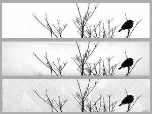 Vogel des Jahres 2012