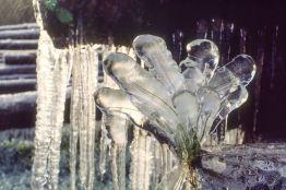 Schwarzwald 1990