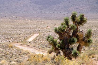 2005-californien-047