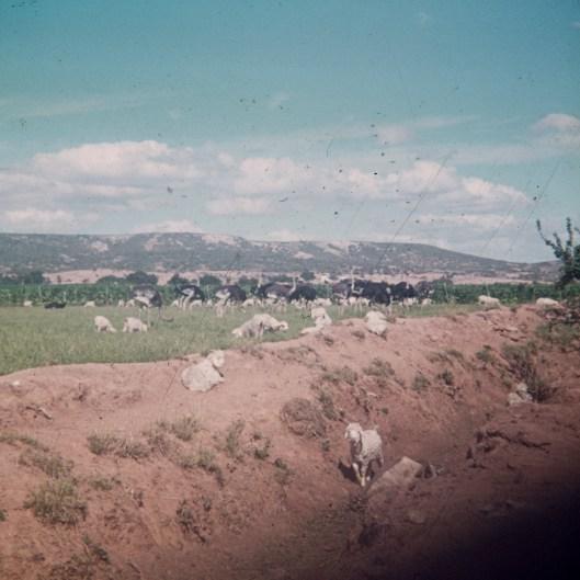 1973-suedafrika-namibia-034