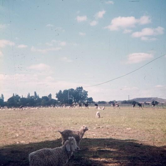 1973-suedafrika-namibia-042