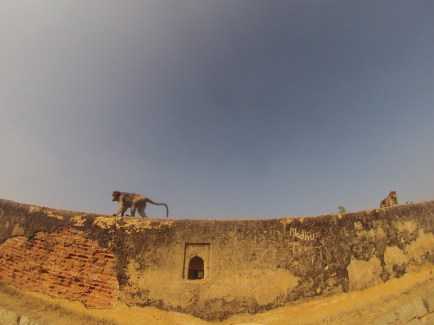Fort owned by monkeys