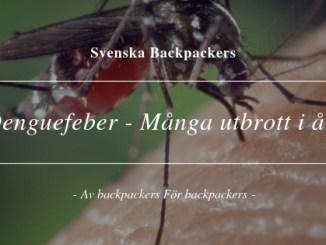 Denguefeber - Många utbrott i år