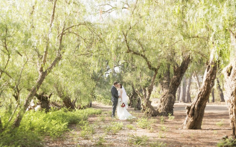 Seppeltsfield winery wedding