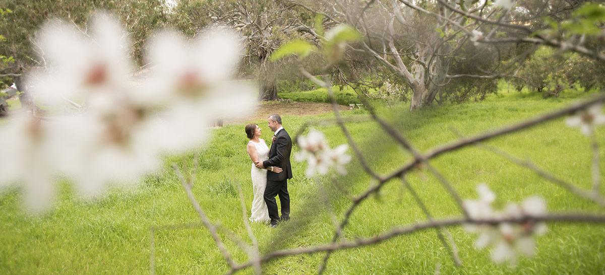 Bride and groom through cherry blossoms