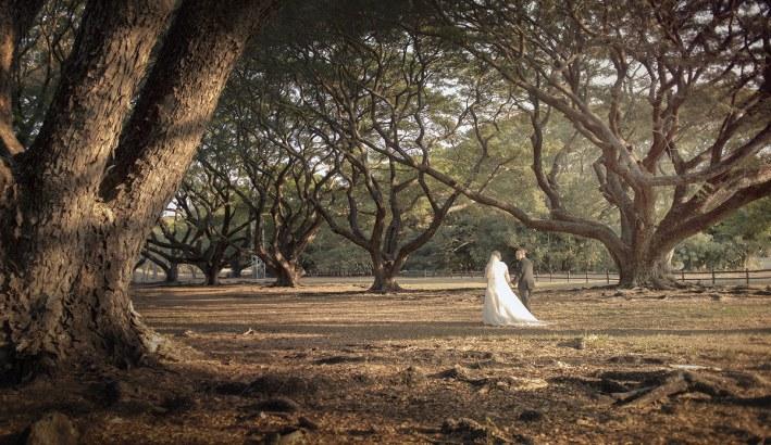 Darwin wedding trees