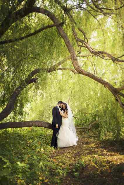 Under a weeping willow