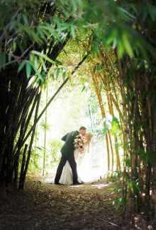 Amongst the bamboo