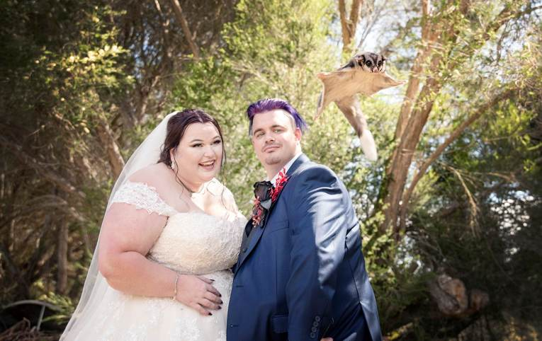 Sugar glider with bride and groom