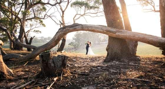 Bride and groom under a fallen tree