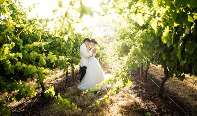 sunny vineyard photo at Mollydooker wines