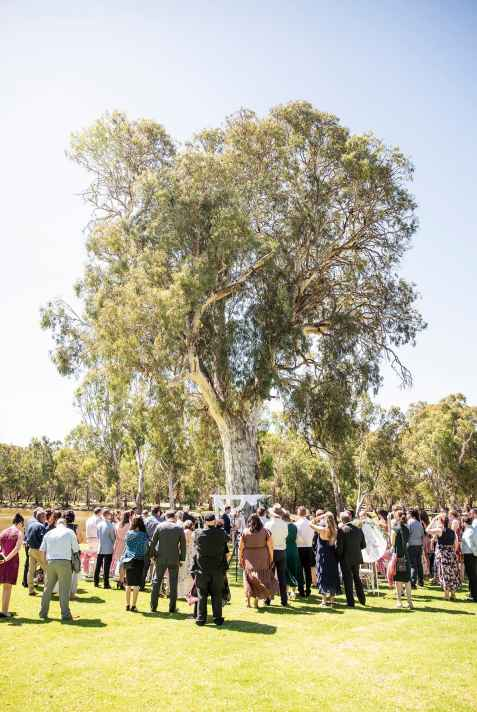 Serafino wines wedding tree