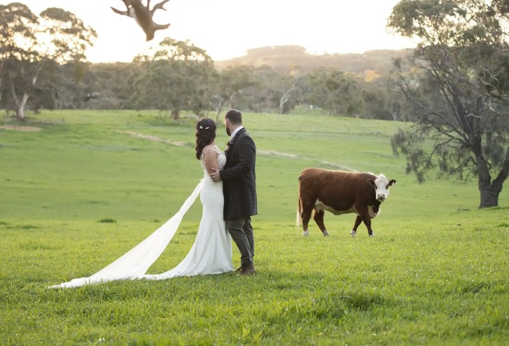 bride and groom checking out the cow
