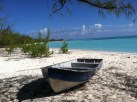 The animal was found on Gordon's Beach located at the southernmost point of Long Island, Bahamas.