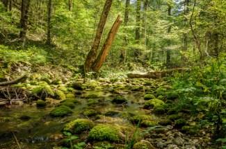 Susica River