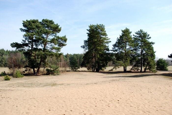 Česká Sahara