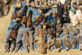 Akodessawa Fetish Market