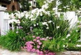 цветы, почва для них