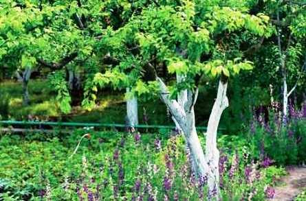 деревья на даче