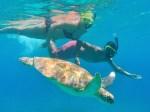 Honeymoon with turtle
