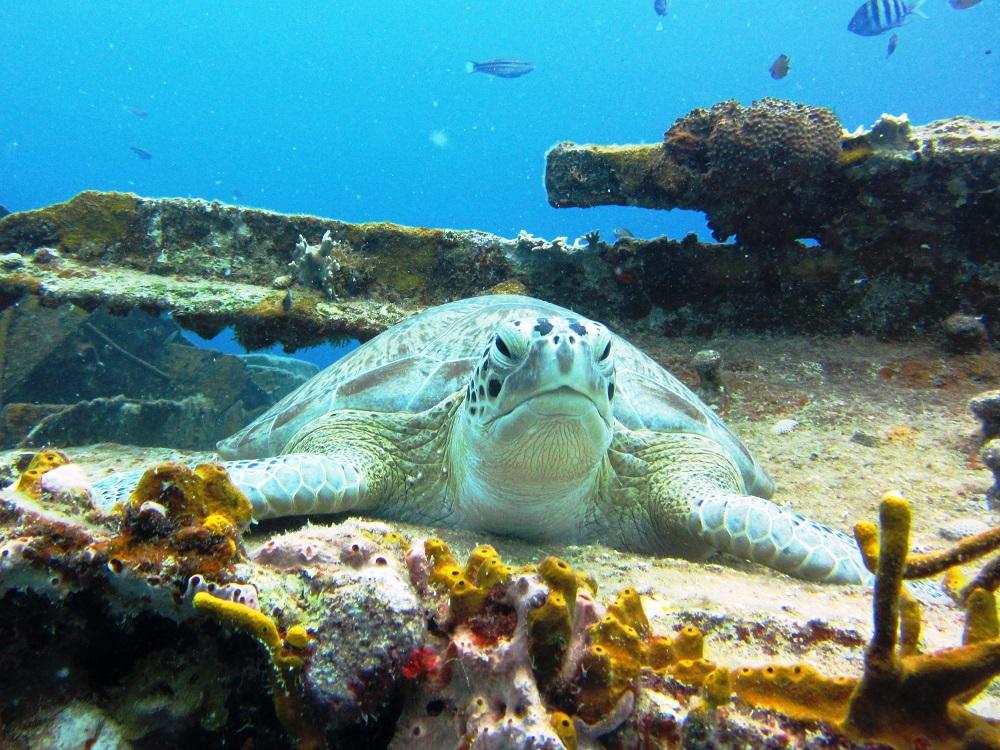 Turtle - Head On