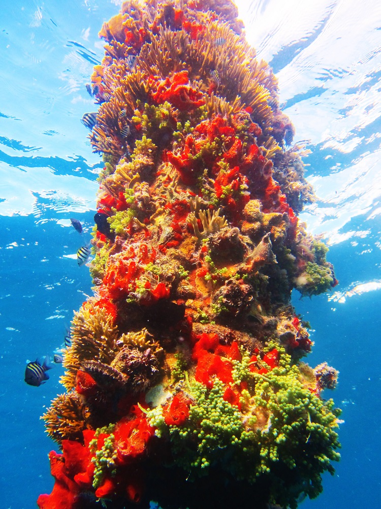 Reef On A Buoy